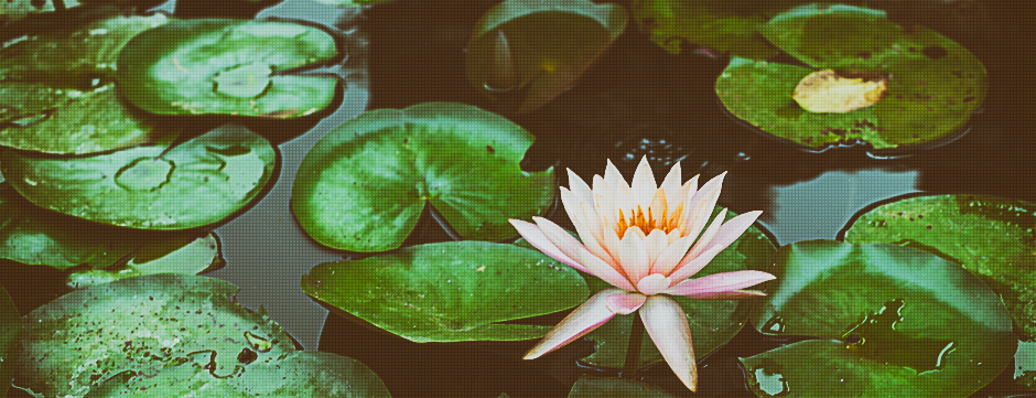 Water Lily Rest